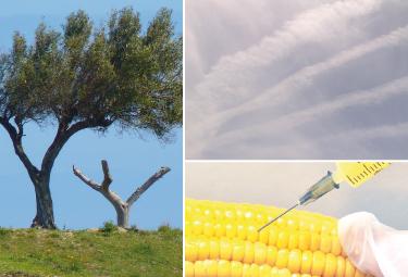 """Lecce, 15 Maggio 2015: """" XYLELLA, OGM E SCIE CHIMICHE """""""