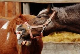 La Prima Rete Italiana di Santuari per Animali Liberi