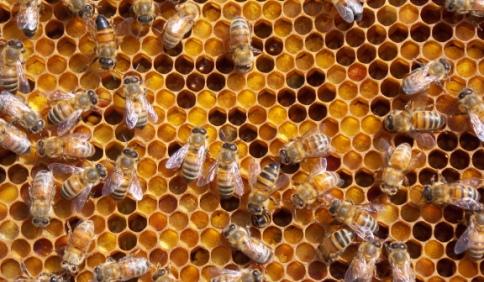 Acido Ossalico e Metodo Termico per Distruggere la Varroa